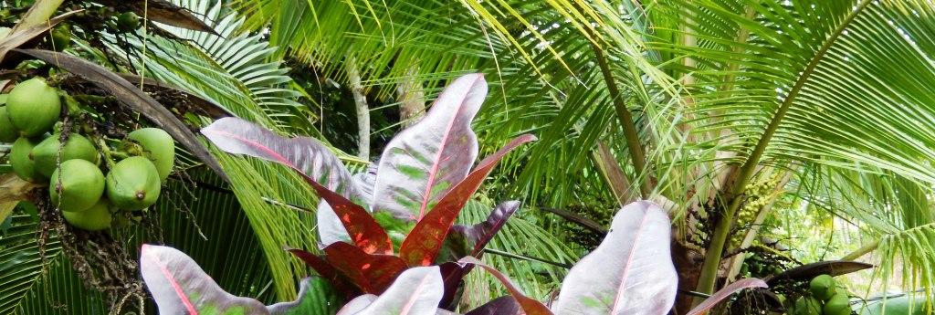 Serenity Gardens' FruitTrees